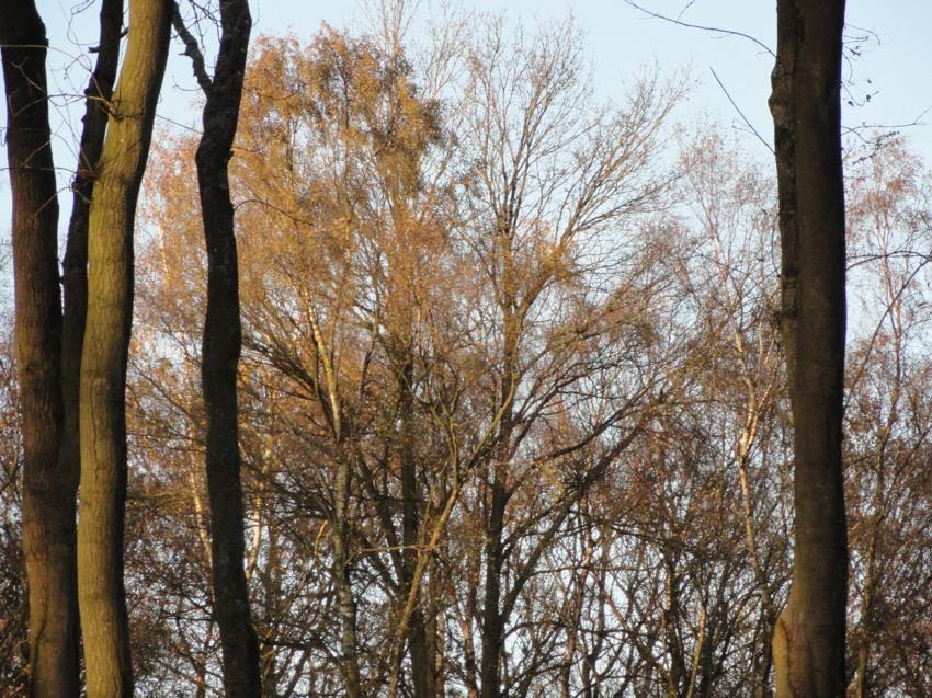 woodland image